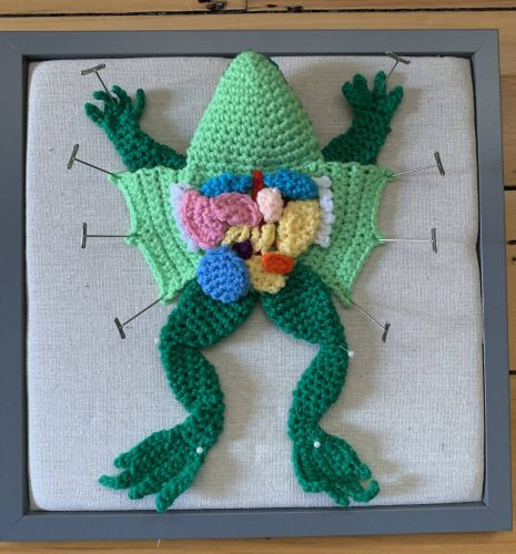 Amigurumi frog crochet pattern review by yarnia7 for cottontail & whiskers